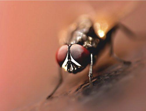 Fazenda tem moscas